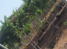 مطلوب خبير زراعي عنب لضمان مشروع انتاج عنب