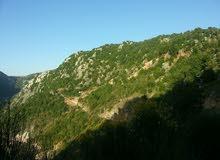 ارض مساحة 900 موقع مميز بكسروان تطل على احلا المناظر الطبيعي
