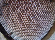 اليعسوب للعسل الطبيعي الحر