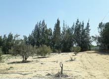 مزرعه للبيع بالمنايف ابوصوير الاسماعيليه