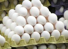 كرتون بيض