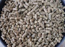 كونتينر من كبسولات البرسيم الايطالي للبيع بالجمله Alfalfa pellets full cont   ه