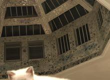 قطط صغار بيكي فيس للبيع بالرياض