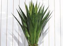 نباتات صناعية داخلية