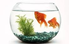 Fish Bowl Aquarium Round Glass Shape