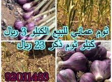 ثوم عماني إنتاج الجبل الأخضر