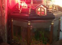 حوض سمك حجم كبير مع جميع معداته