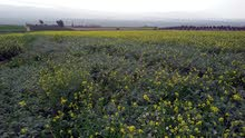 ارض ممزه وموقع مميز للبيع