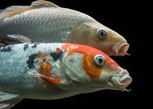 يوجد لدي نباتات مائية خاصة للاسماك زينة بالوان واشكال جميلة