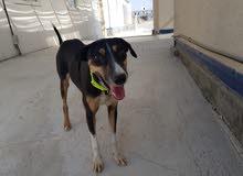 كلب للتبني - dog for adoption