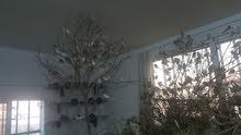 غرفة طيور جنة