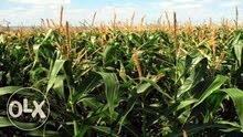 ارض زراعية للبيع المعلن عنها بالرقم 01118829263