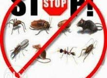 تنظيف القلل مكافحة الحشرات والصراصير