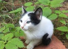 قطط للتبني 5