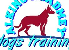 الكينج اكاديمى لتدريب واستضافة الكلاب
