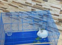 أرنب ابيض صغير مع القفص