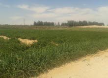 مزرعة أرض حمراء