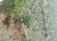 مزرعه للبيع في اعلى جبال العالوك