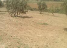 أرض فلاحية للبيع بمنطقة سيدى زيد وادى الرمل زغوان