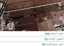 ارض مميزه للبيع في ام العمد -العيادات -5 دونم