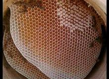 عرض خاص لعسل دوعن