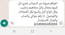 ذا رقمي بفتح الخط السودان