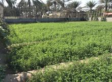 قت عماني (برسيم) جديد وحساب المن بريال فقط. 5 ربط كبار الموقع بركاء