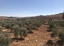 مزرعة للبيع- طريق جرش المفرق/قطع اراضي