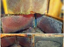 الناصرة لإنتاج العسل_Nazareth to produce honey