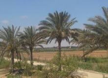 للبيع قطعة ارض زراعية مساحة عشرة فدان بطريق مصر اسكندرية الصحراوى