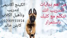 الكينج أكاديمى لتدريب وتأهيل الكلاب