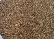 بذر قت عماني