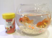 Glass boll and  2 fish& food. for sale?