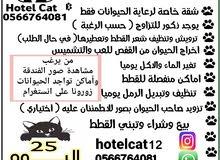 فندقة ورعاية قطط / كلاب