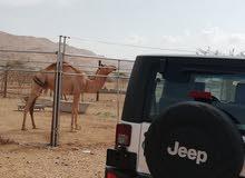 90,000 - 99,999 km Jeep Wrangler 2009 for sale
