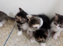 قطط متدربة على المراحظ.......