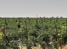 اراضى ومزارع تبدا مساحتها من 5 فدان الى 200 فدان