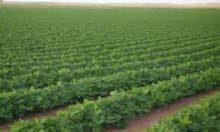 اغتنم فرصة مشروع  وامتلك مزرعة بوادى النطرون مع السنابل لاند