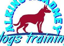 استضافة كلاب وتدريب وتاهيل