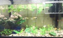 AQUARIUM WITH MANY FISH AND ACCESSORIESS //// حوض سمك مع كثير اسماك و الاكسسوارات