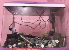 حوظ سمك     طول 60    ارتفاع 45       عرظ30     فقط مابي  سمك