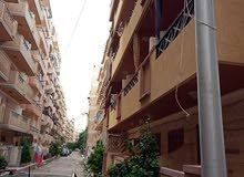 من المالك شقة غرفة وصالة 135 االف بشاطئ النخيل الاسكندرية