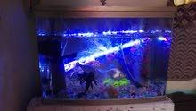 حوض اسماك البيع جميع اغراضة جديد ونضيف مع السمك يحتوي علا اسماك زينة 8