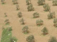 قطعة ارض للبيع حوض ام الابار الشرقي بسعر مميز