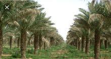مطلوب مهندسين زراعيين  للسفر للسعودية