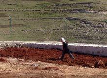 مطلوب مزارع مصري لمزرعه صغيره بالسلط مع مبيت