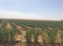 للبيع مزرعه 50 فدان قابلة للتجزئة رى نيلى وكهرباء عقد اخضر