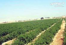 مزرعة استثمارية لزراعة النخيل الغور غور كبد وحدة زراعية