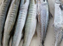 X FOX for fishing trips in Abu Dhabiرحلات بحرية