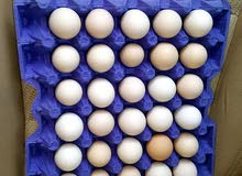 بيض دجاج محلي مهجن فرنسي